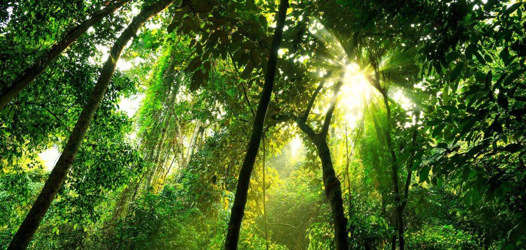 Amazon forest sunlight
