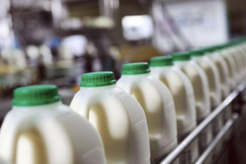 dairy milk production and manufacturing